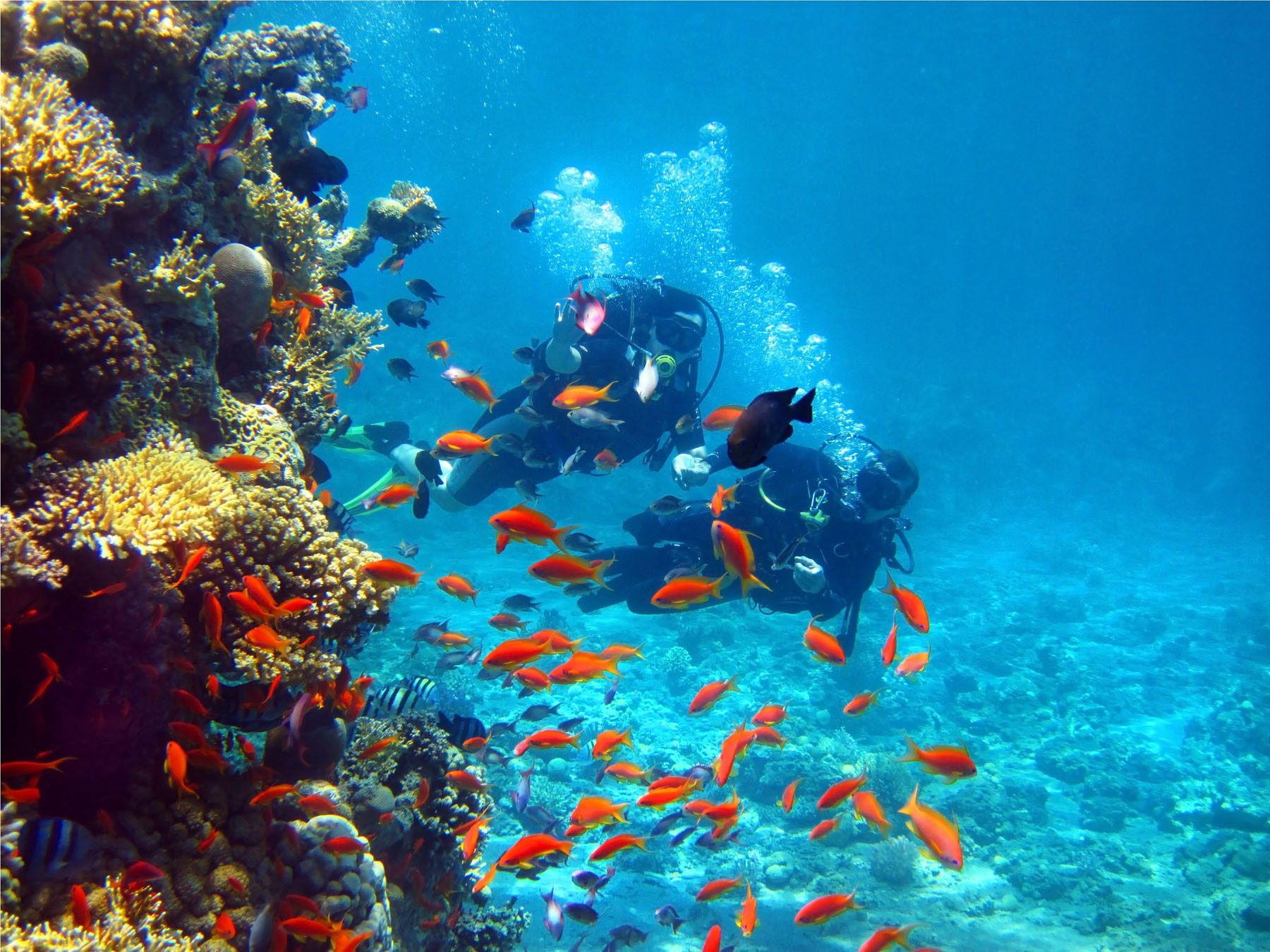 buceo_background1