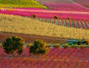 foto-floracion- DOMINGO LARROSA